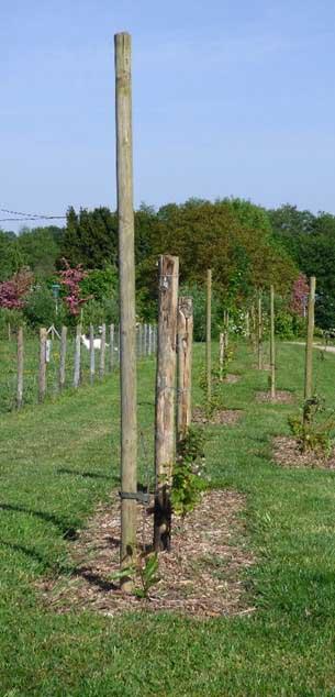 Un espace vert situé dans la commune de La Chapelle-des-Fougeretz