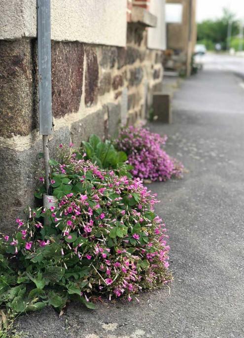 Des fleurs sur les trottoirs de La Chapelle-des-Fougeretz
