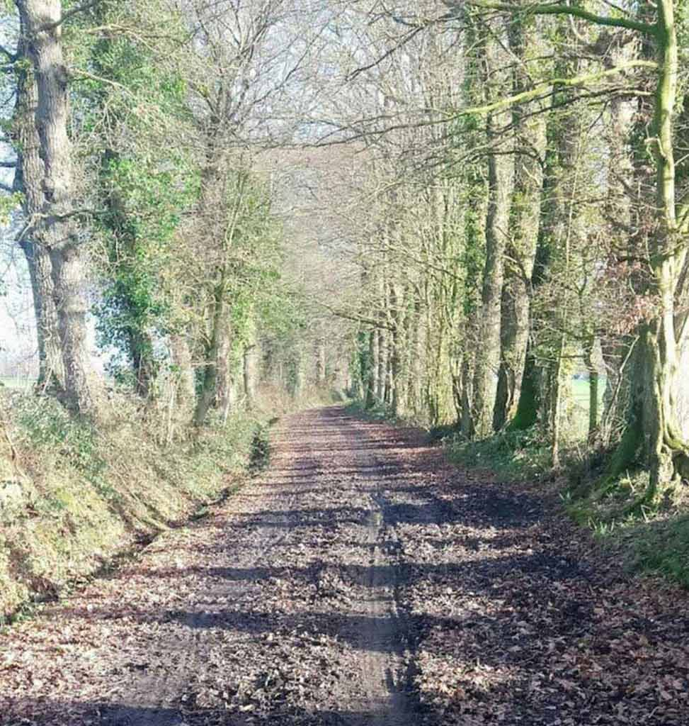 Un chemin nature dans la commune de La Chapelle-des-Fougeretz
